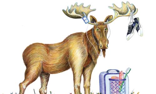 Charter Challenge Moose
